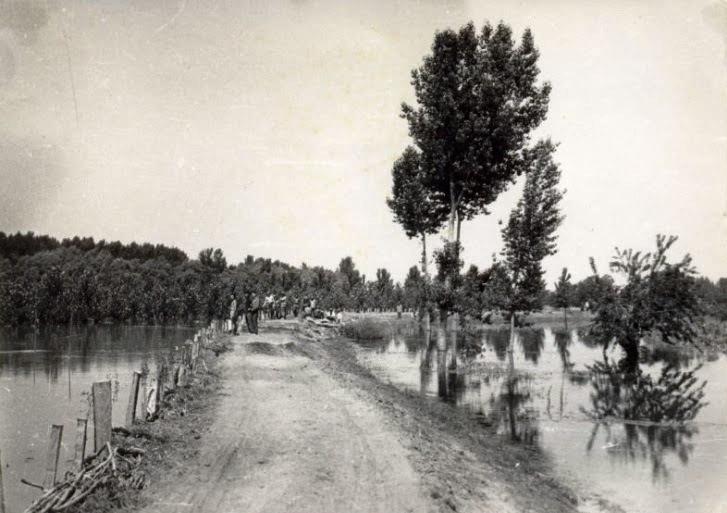 Dunav nasip poplava Beograd leva obala