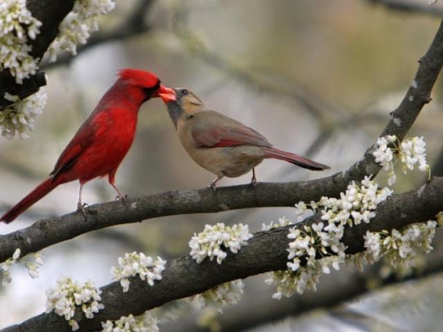 Stiže proleće, otvorite prozore duše