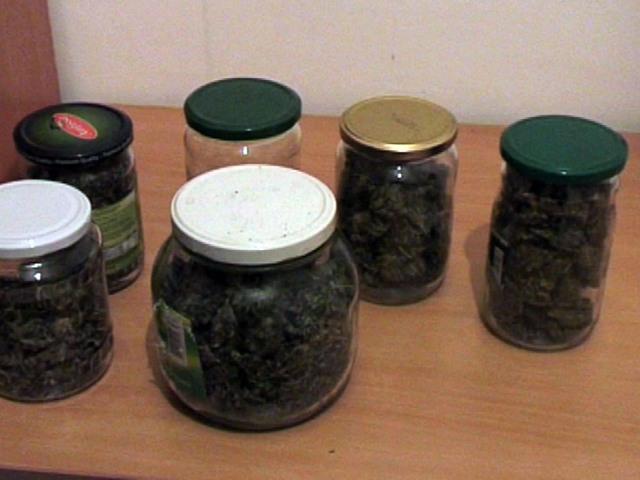 Uhapšen diler u Krnjači: Gajio marihuanu u kući