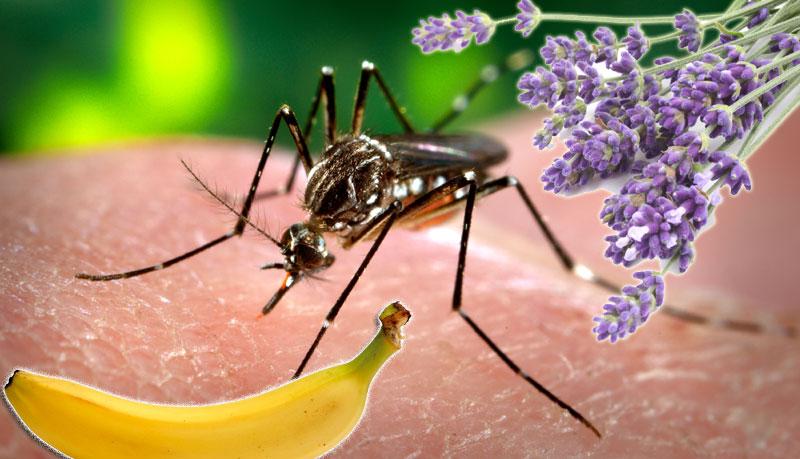 Komarci na levoj obali u rojevima i posle zaprašivanja!