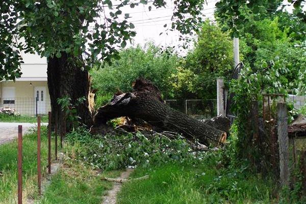 Olujni vetar preksinoć oborio drvo na kuću u Borči (FOTO) - 2015