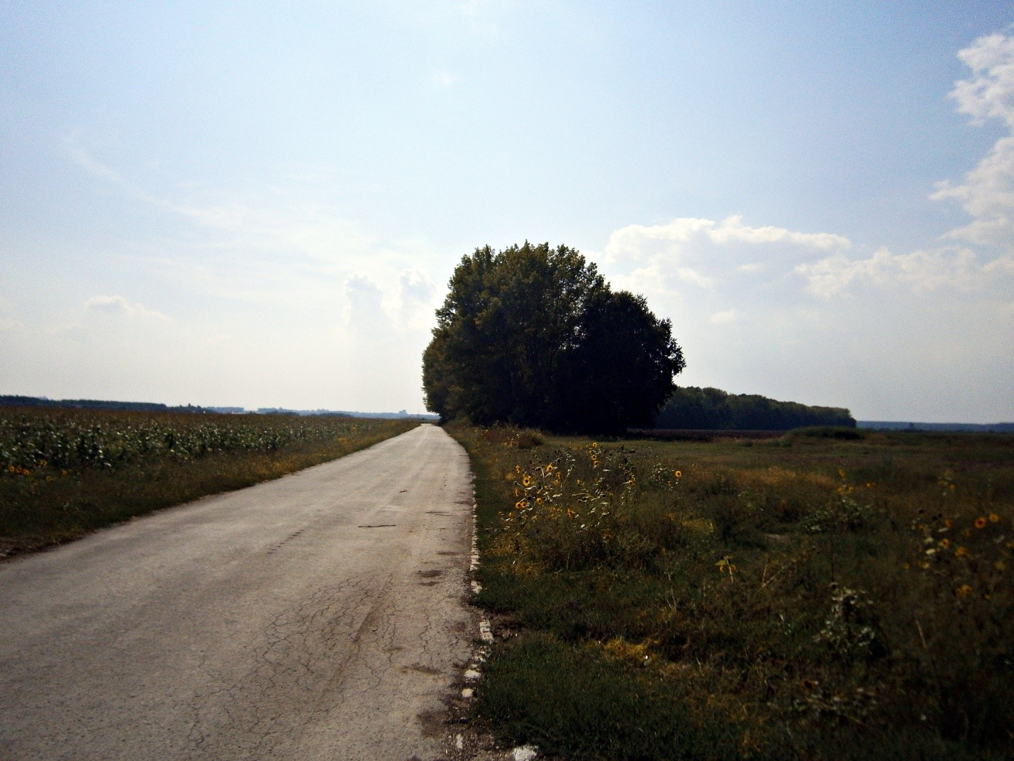 borca-ovca-jabucki-glogonjski-padinska-skela-kovilovo-crvenka-borca-kovilovo-crvenka-2015-09-04