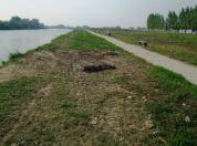 Lobiranje - očišćen kanal Vizelj