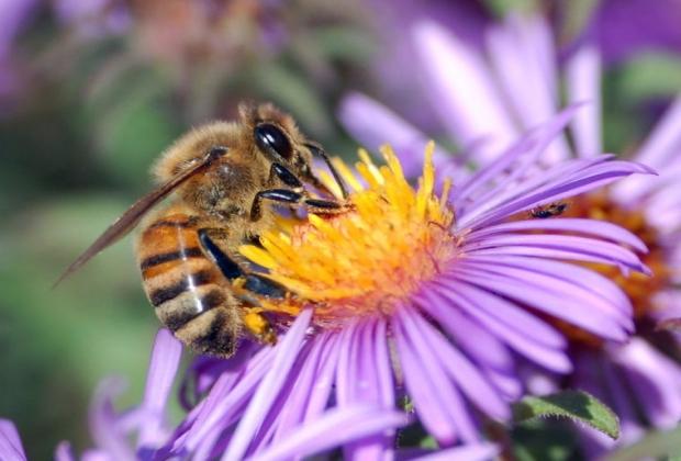 Zaprašivanje komaraca počinje: Pčelari preduzmite mere zaštite
