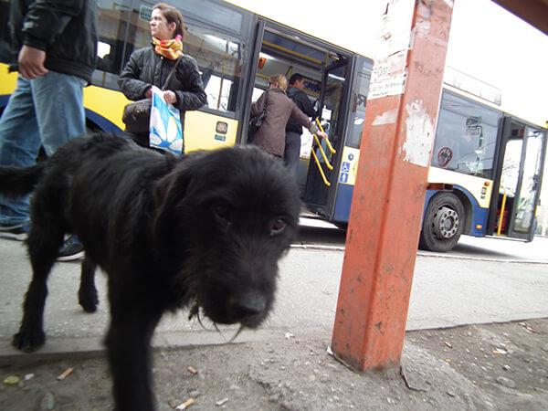 Izgubljeni pas u Borči kod Putnika, LOBI