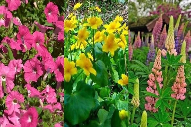 Spremite se za prolećno sađenje cveća-2015-08