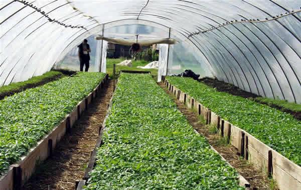 Dodela podsticajnih sredstava u oblasti povrtarstva i voćarstva-2015
