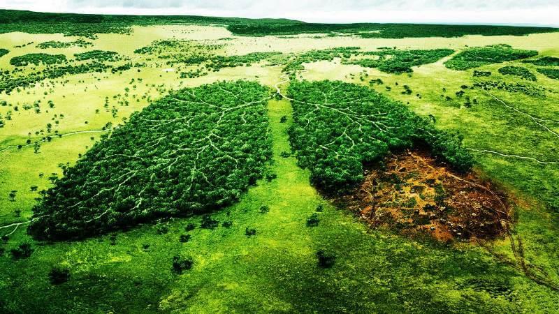 Ekološki bonton - Bontonizacija